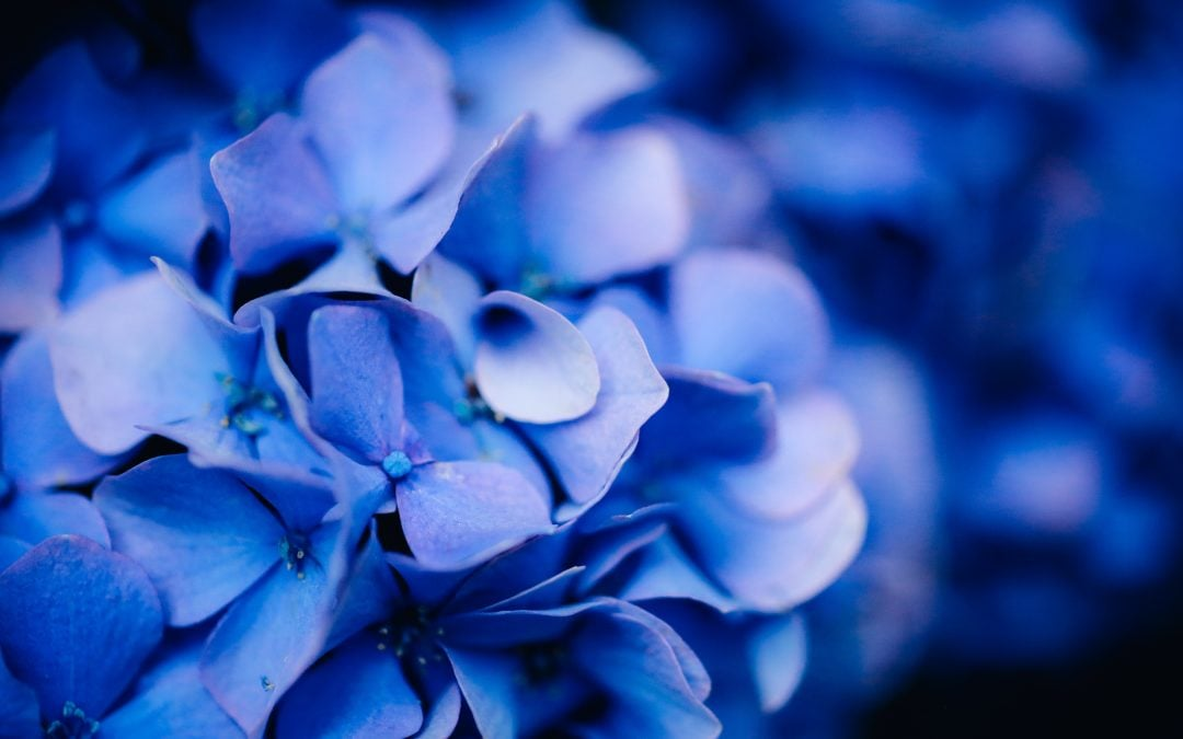 Hail, Hydrangeas, and Hope – 5 Nuggets of Wisdom for the Storms of Life