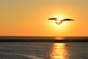 Silhouette Of Brid FLying In Front Of Sun At Sunset